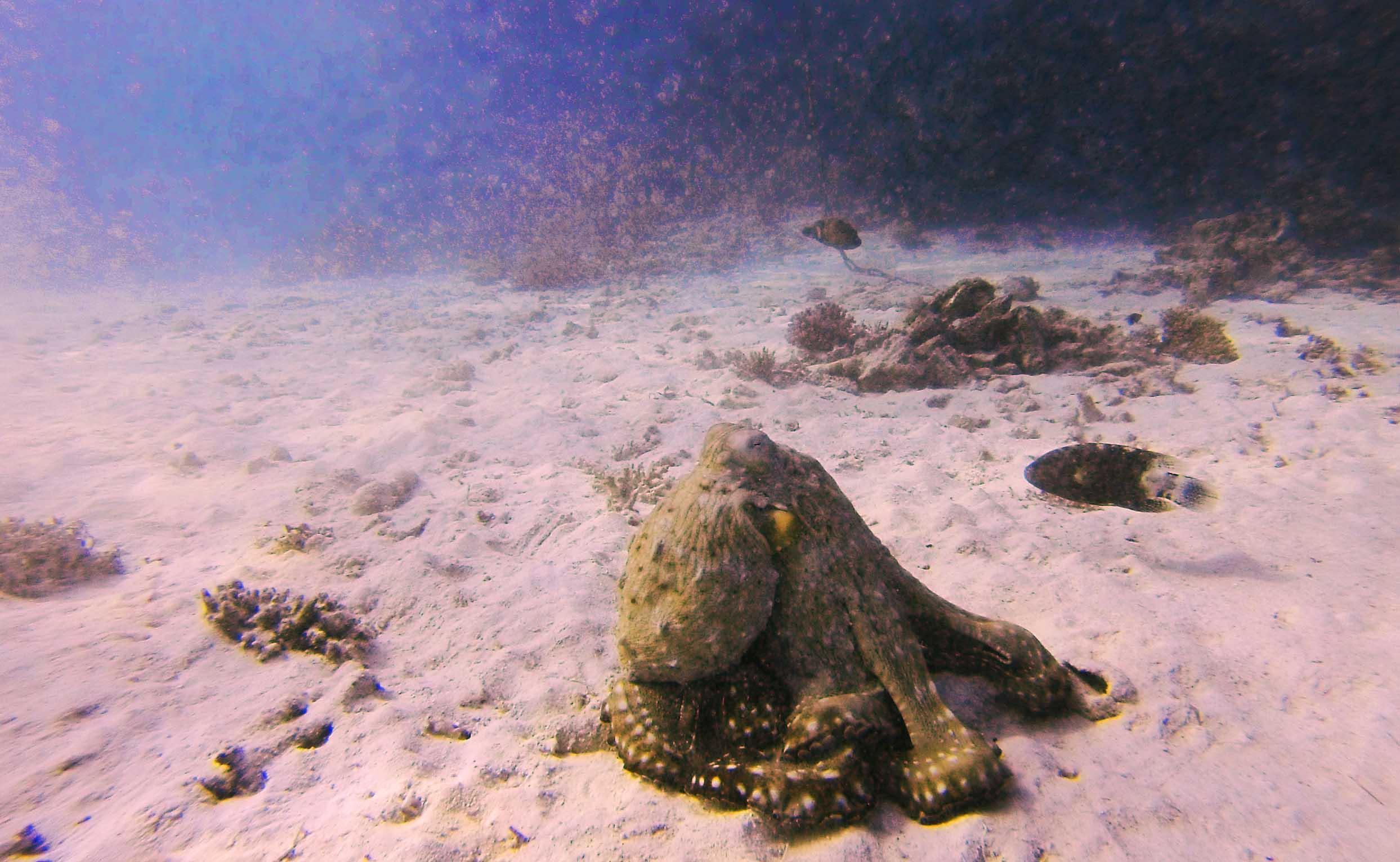 osmiornica pod wode