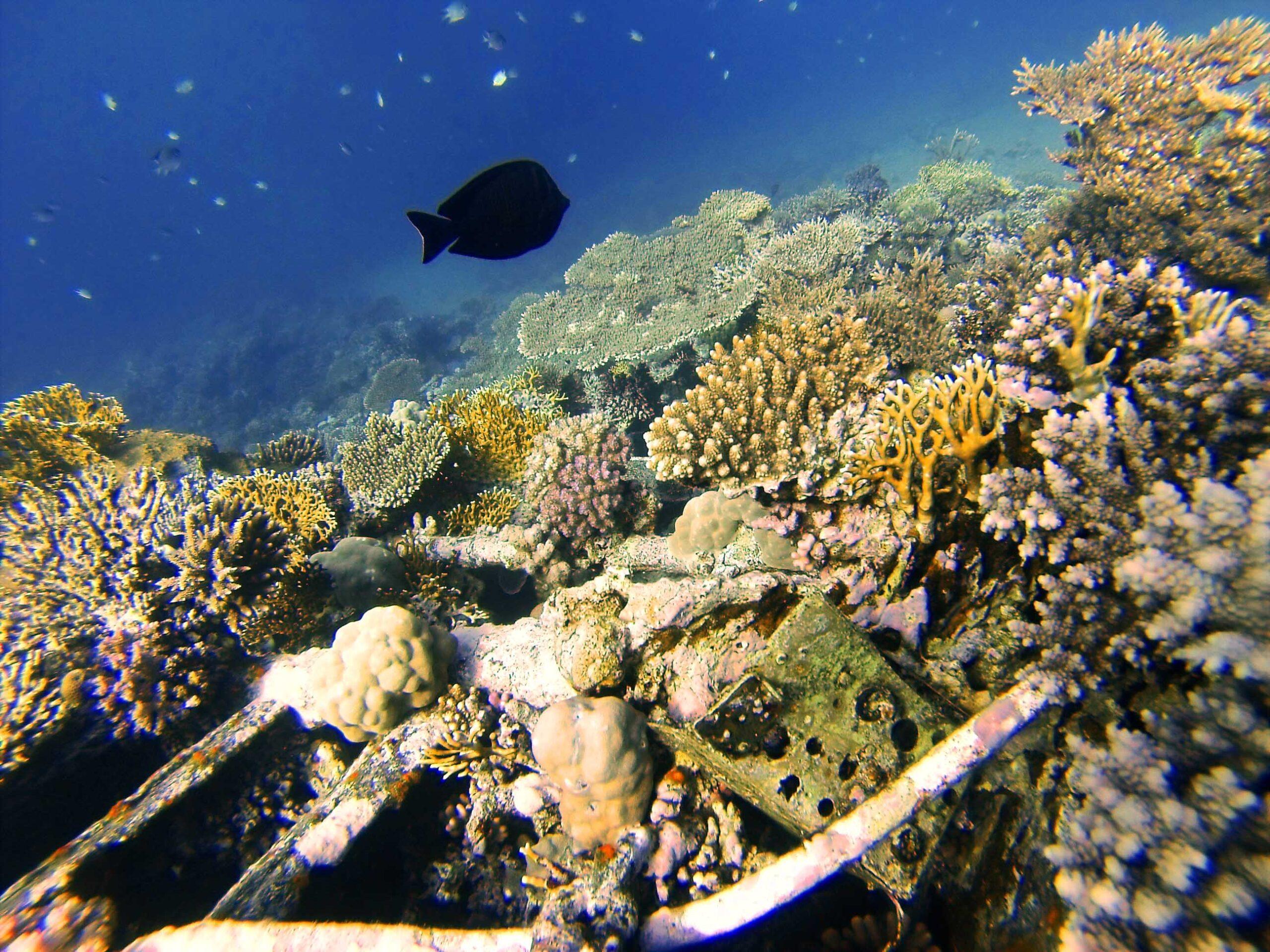 Podwodny świat Morza Czerwonego
