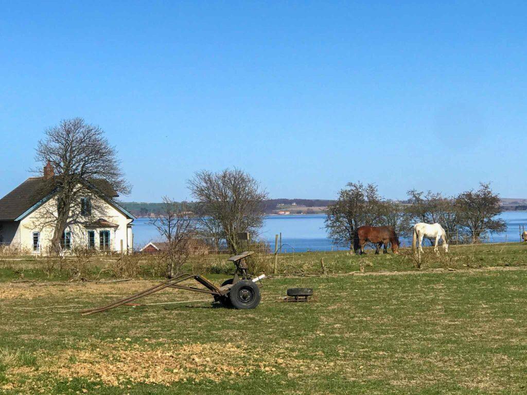 Konie na wyspie Ven